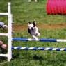 Roy Jump2